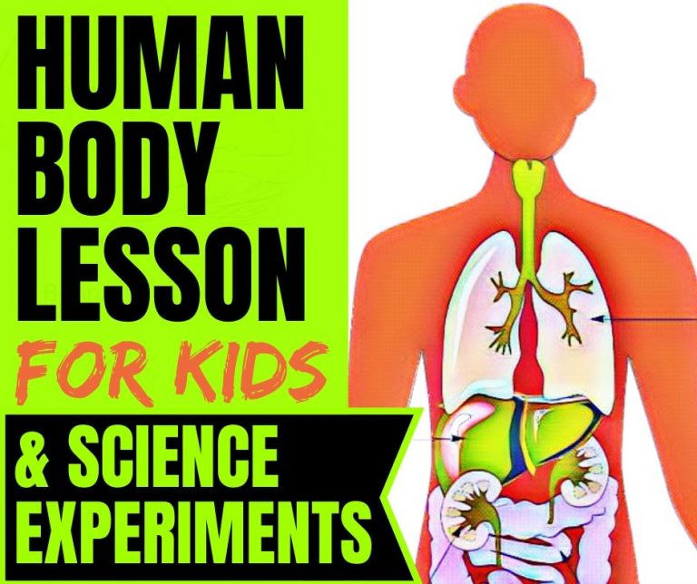 Human Body Lesson: Science Experiments & FREE Worksheets
